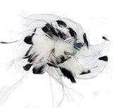 veren zwart wit